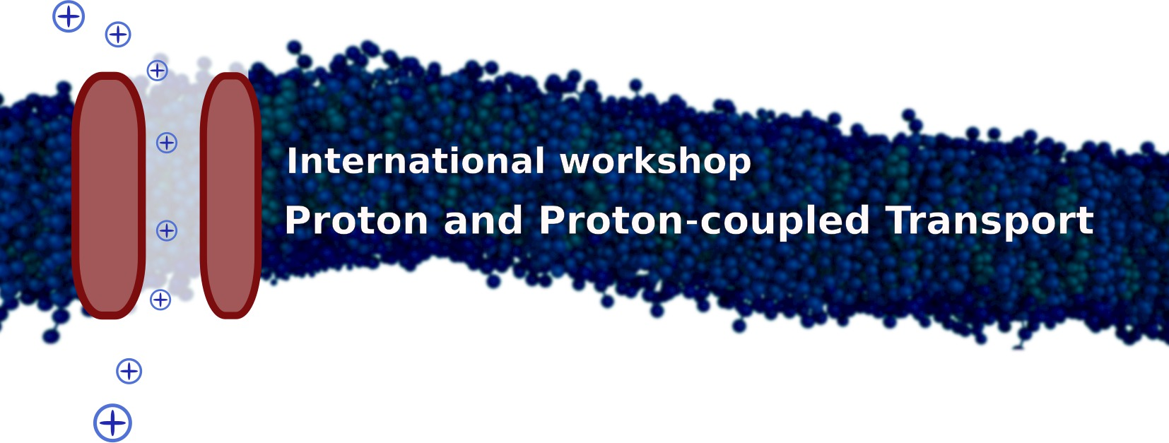 Logo Proton and Proton-coupled Transport